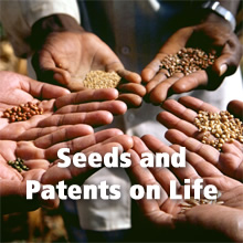 Seeds and Patents on Life