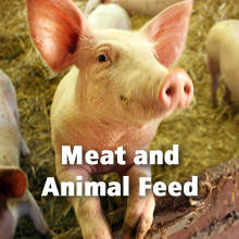 Meat and Animal Feed